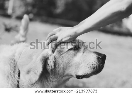 Cute golden retriever and the hand of the host. Black and white - stock photo