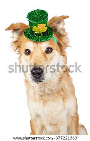 Cute Golden Retriever mixed breed dog wearing a festive green St. Patrick's Day hat with clover - stock photo