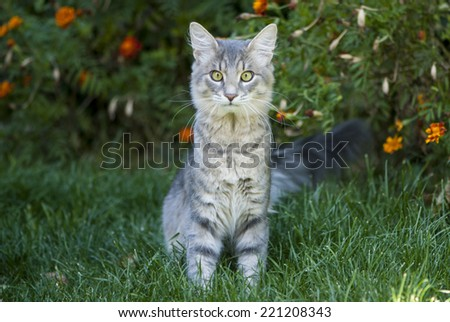 Cute gray cat sitting on the grass - stock photo