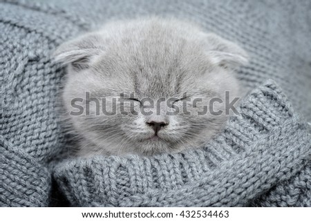Cute gray funny kitten sleep in gray cloth - stock photo