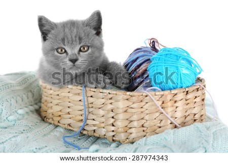 Cute gray kitten in wicker basket with skeins of thread on warm plain isolated on white - stock photo