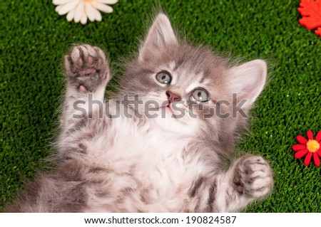 Cute gray kitten on artificial green grass - stock photo