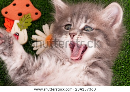 Cute gray kitten playing on artificial green grass - stock photo
