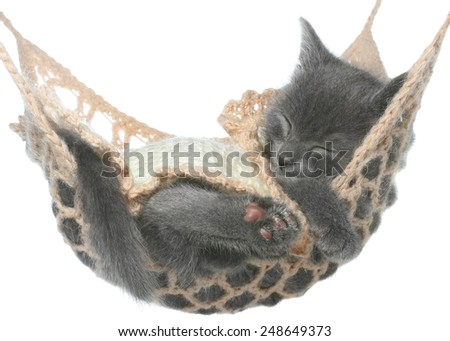 Cute gray kitten under a blanket a sleep in a hammock on a white background. - stock photo
