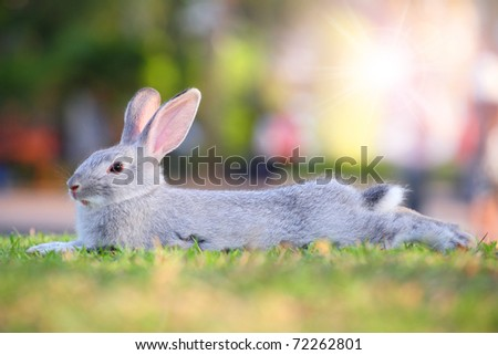 cute gray rabbit on grass with nice background. - stock photo