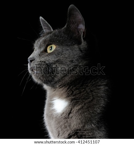 cute grey cat - stock photo