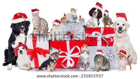 Cute Group of pets in christmas - stock photo