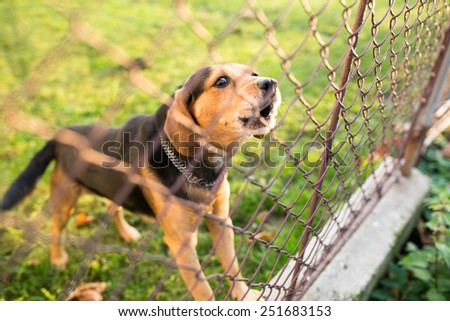 Cute guard dog behind fence, barking, checking you out - stock photo