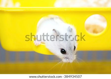 cute hamster peeking out of the window - stock photo