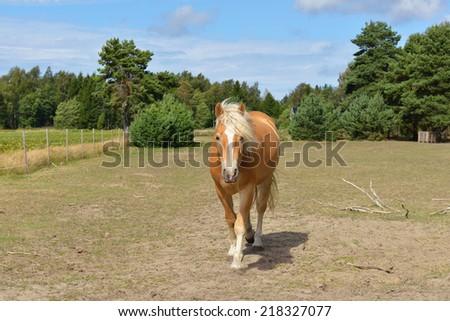 Cute horse on field - stock photo