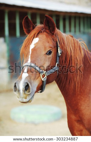 cute horse walks on the ranch - stock photo