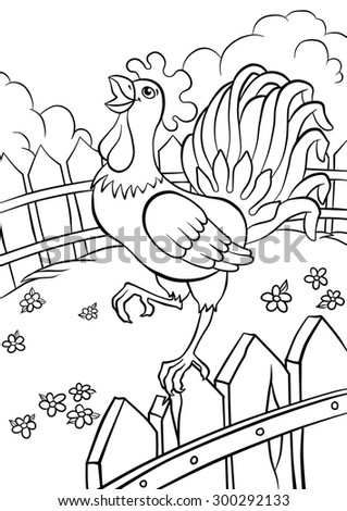 cute kind cock standing in the fence and smiling - stock photo
