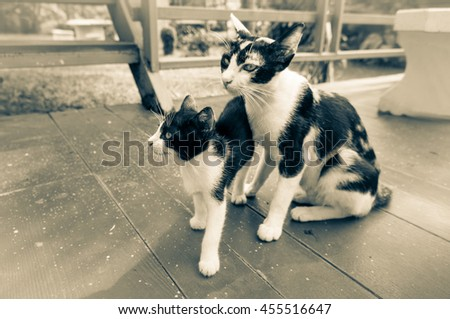 Cute kitten and mother cat lovely / Retro look - stock photo