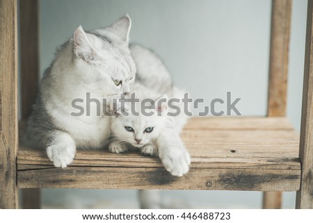 Cute kitten and mother lying on wooden shelf,vintage filter - stock photo