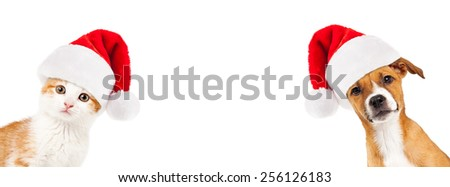Cute kitten and puppy wearing Christmas Santa hats peeking out from the side of a white banner with room for text - stock photo