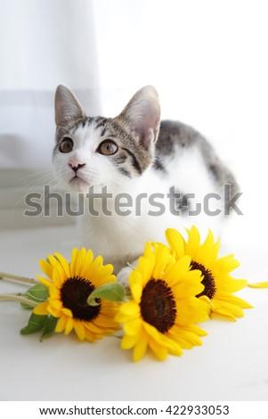Cute kitten and sunflowers - stock photo