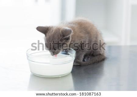 Cute kitten drinking milk from bowl on table - stock photo