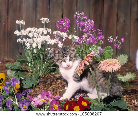 Cute kitten explores the garden - stock photo