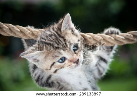 Cute kitten hanging on the rope  - stock photo