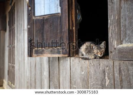 Cute kitten in Falam Town , Chin State, Western Myanmar (Burma) - stock photo