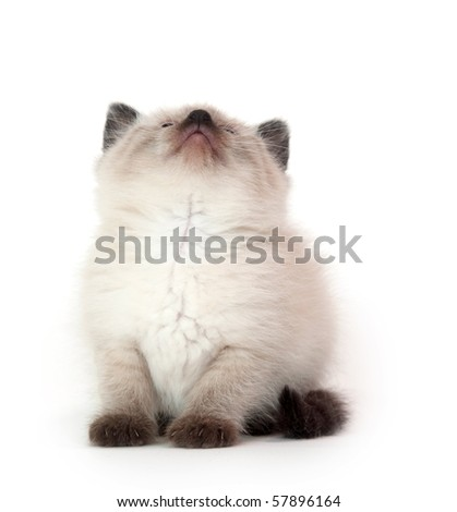 Cute kitten looking up on white background - stock photo