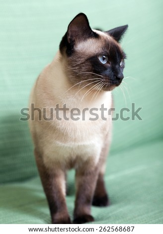 cute kitten  on  green couch.  - stock photo