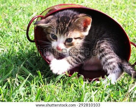 Cute kitten playing in a red pot - stock photo