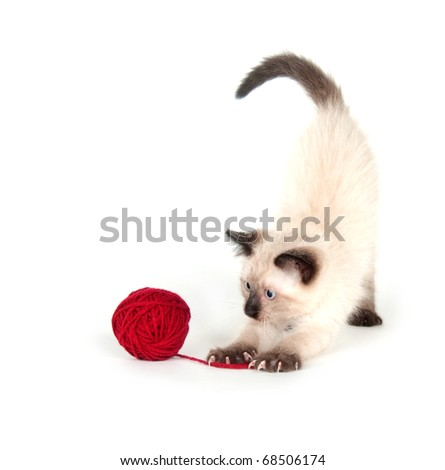 Cute kitten playing with ball of red yarn on white background - stock photo