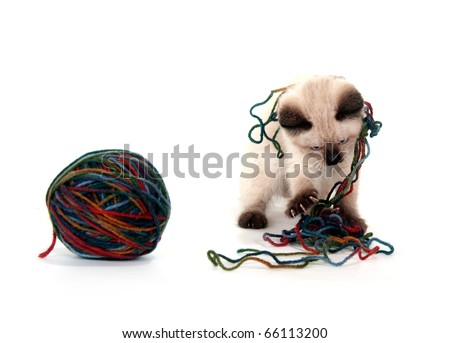 Cute kitten playing with ball of yarn on white background - stock photo