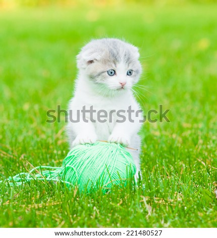 Cute kitten playing with clew of thread on green grass - stock photo