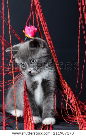cute Kitten portrait, cat playing or sitting in string on an isolated black background - stock photo