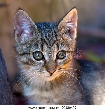 cute kitten's face - stock photo