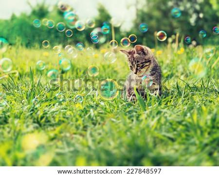 Cute kitten sitting among soap bubbles on summer grass - stock photo