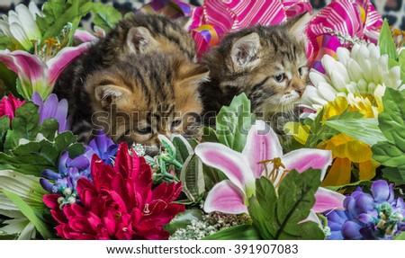 Cute Kitten sitting in a flower bucket - stock photo