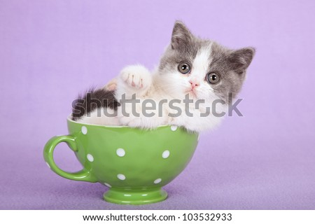 Cute kitten sitting inside green cup on lilac purple background - stock photo