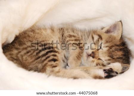 cute kitten sleeping in the Santa's cap - stock photo