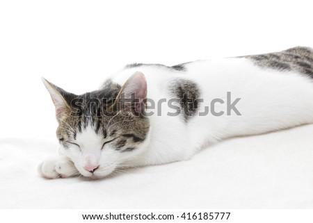 Cute kitten sleeping on white background   - stock photo