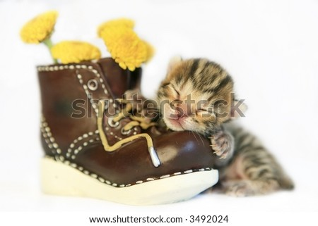 Cute kitten taking nap on old boot with yellow flowers inside - stock photo