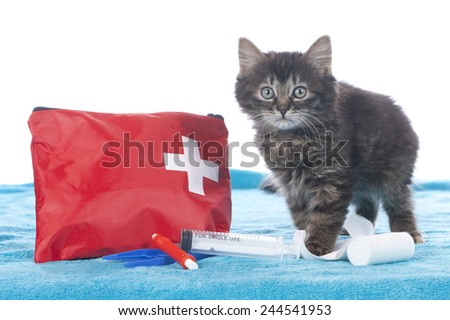 Cute kitten with first aid kit isolated - stock photo
