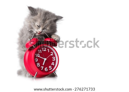 Cute kitten with red alarm-clock isolated on a white background - stock photo