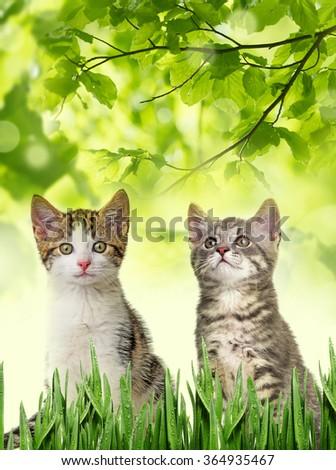 cute kittens  - stock photo