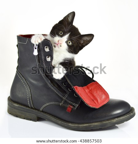 Cute kittens sitting inside a shoe on isolated background - stock photo