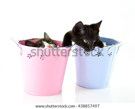Cute kittens sitting inside in pastel containers on isolated background - stock photo