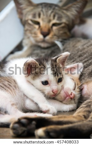 Cute kittens sleeping after breastfeeding time from mother - stock photo