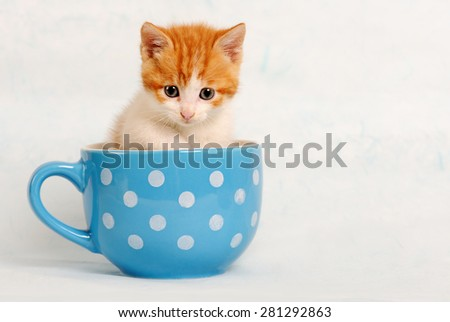 cute kitty - stock photo