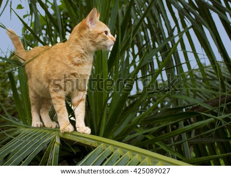Cute kitty on coconut palm tree. Cute cat, cat in tropic garden, red cat image, small cat on branch, domestic cat playing, beautiful cat, lovely cat, cat picture, pet red cat, cat stares, jungle cat - stock photo