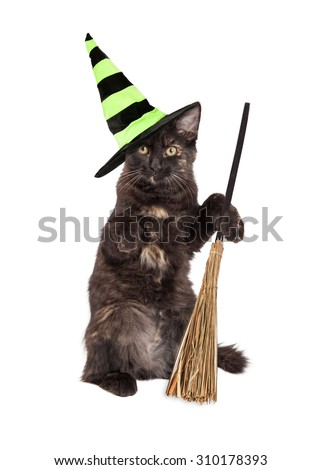 Cute little black kitten wearing a Halloween witch hat and sitting up holding a broom - stock photo