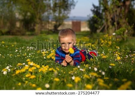 Cute little boy lies between dandelions (shallow DOF). - stock photo