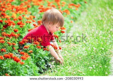Cute little boy playing in flowers  - stock photo