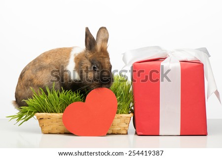 Cute little brown bunny sitting in grass near red paper heart and present box with white ribbon. Concept for Valentine's Day - stock photo